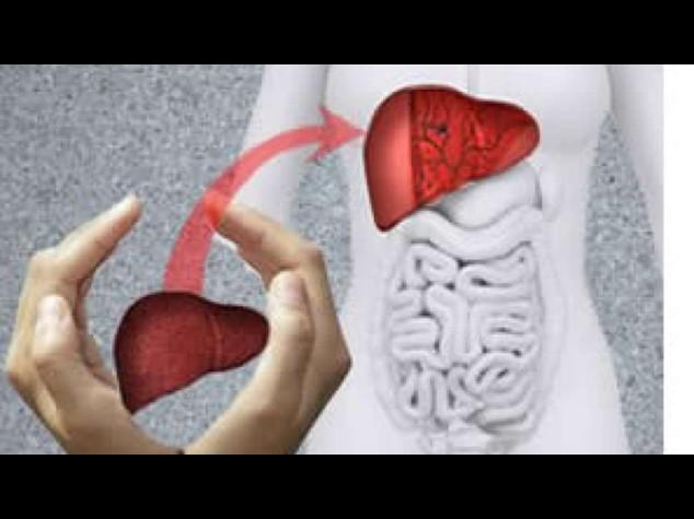 Una nuova tecnica fa conservare il fegato per 4 giorni
