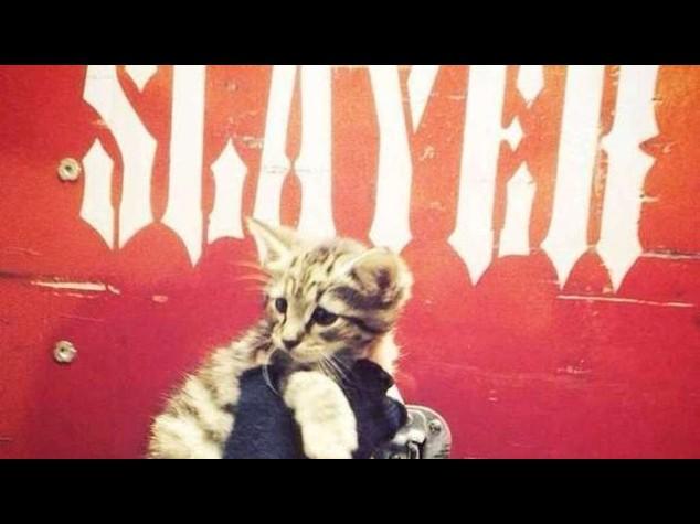 Il rude gruppo metal Slayer salva una gattina