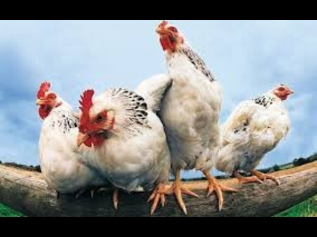 Francia, torna l'allarme aviaria, 8 paesi sospendono import
