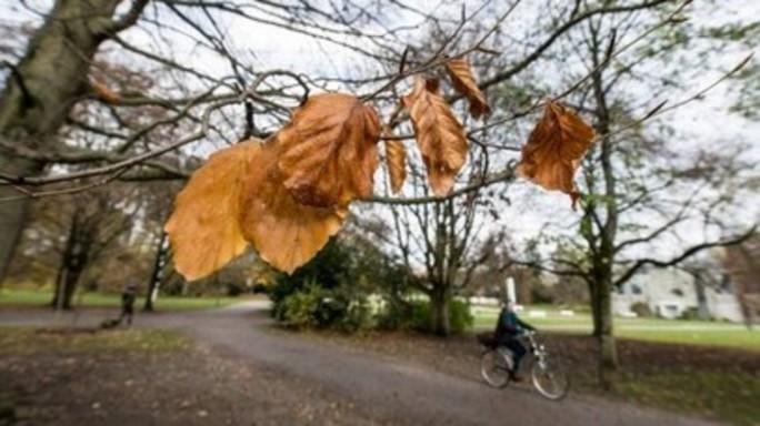 L'autunno muove i primi passi, da giovedi' temporali