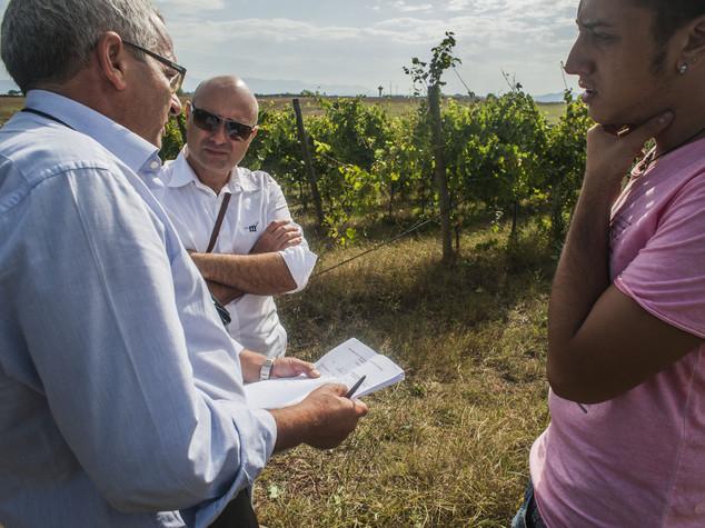 Lavoro: Coldiretti, in agricoltura aumenta il triplo (+5,8%)