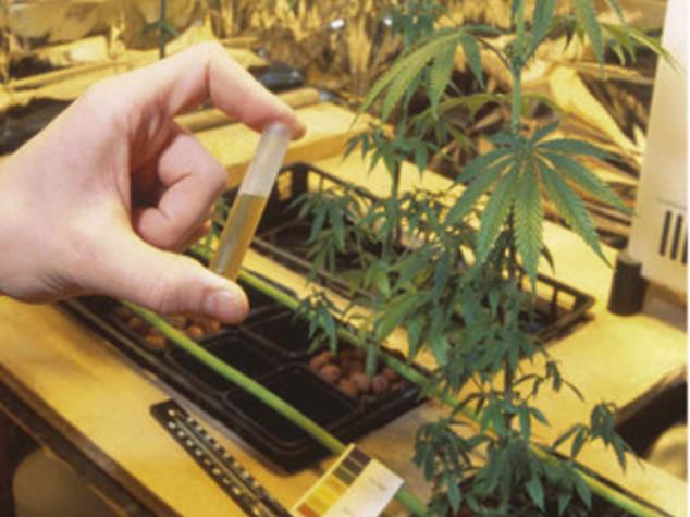 Usa, aumenta il consumo di cannabis dove legalizzato