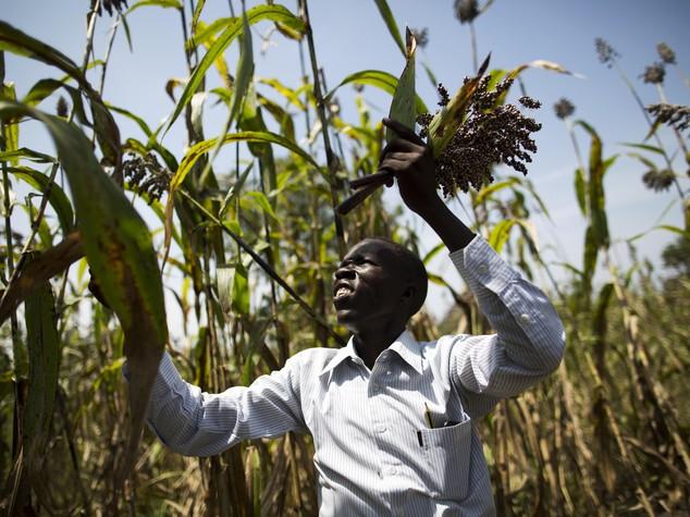 Ocse-Fao: Agricoltura chiave per sostenibilita', resta gap Africa