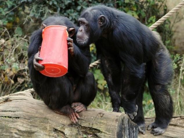 Patate e tè caldo contro freddo per animali Bioparco - Foto