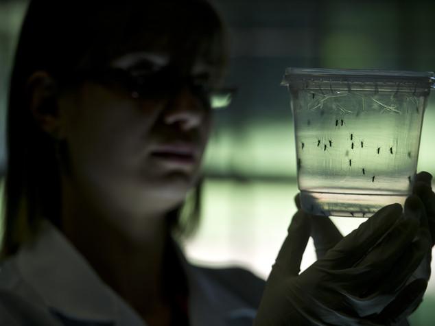 Il virus Zika fa paura, più casi con ritorno zanzare