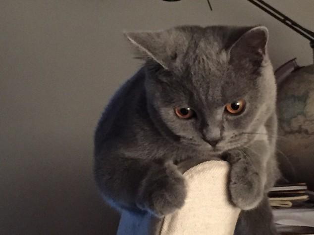 E' la Giornata del gatto, su Twitter dilagano i mici - Foto