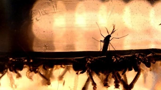 Zika e la zanzara, tutto sul virus che terrorizza le mamme