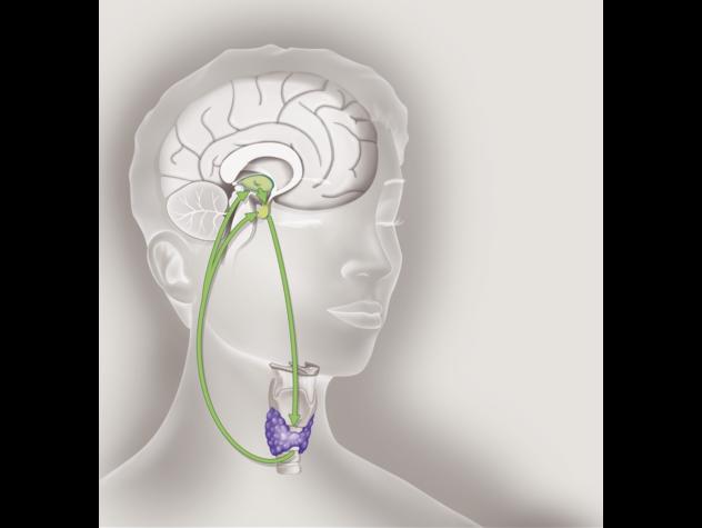 Giornata mondiale tiroide, in Italia 6 milioni di malati
