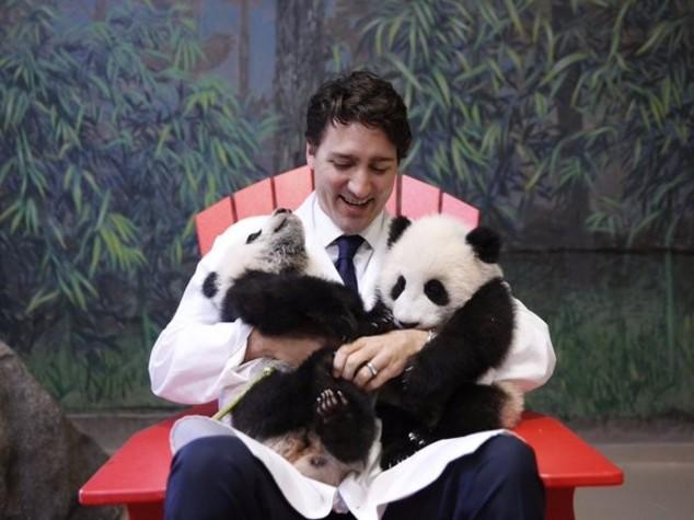 Canada: primo ministro e i cuccioli di panda, foto su Twitter