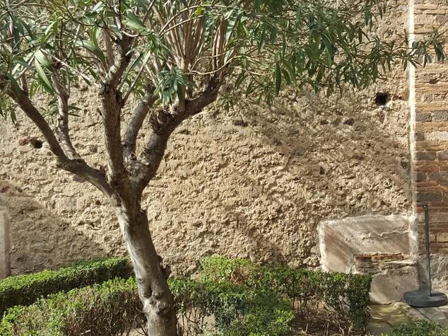 A Pompei restaurate cinque domus con i giardini