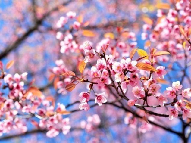 Primavera arriva in anticipo, finito inverno 'bollente'