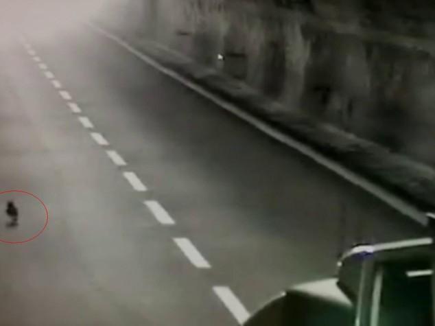 Gatto fugge da auto e causa incidente su A12 a Chiavari