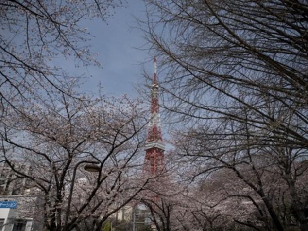 Ventenne attacca centro disabili in Giappone, 19 morti