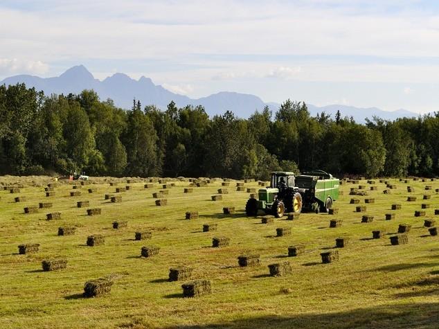 Istat, nel 2015 il settore agricoltura e' in ripresa