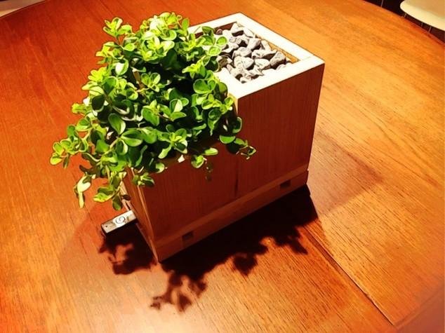 Quando la pianta cresce... nel pc