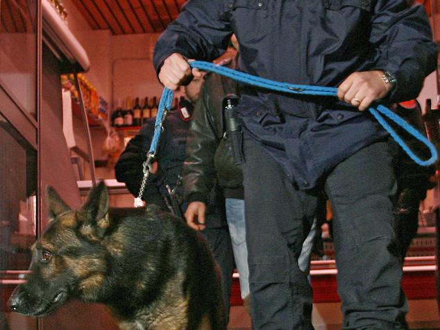 Il cane-carabiniere scova cocaina nello scarico, un arresto nel Crotonese - VIDEO
