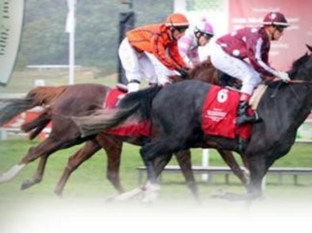 Italia-Emirati: a Roma la World arabian horse racing conference