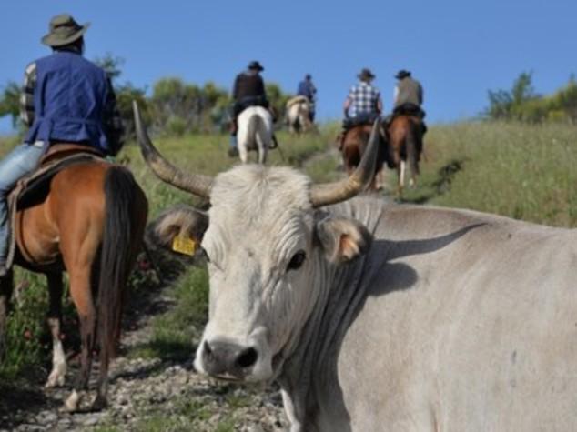Butteri, la dura vita millenaria nel far-west de noantri