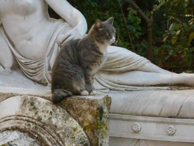 Un carico da 270 chili di cibo per i gatti di Cinecitta'