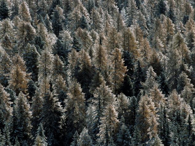 Foreste: Crea, patrimonio da valorizzare con la gestione attiva