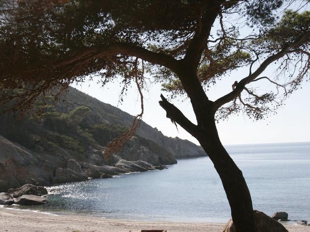 Ambiente: Cfs, il fotovoltaico sbarca nell'isola di Montecristo