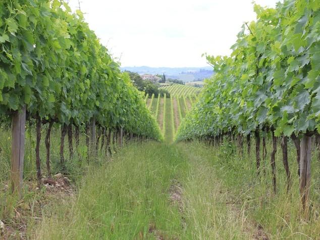 Progetto Erasmus per aspiranti viticoltori da Italia, Romania e Bulgaria