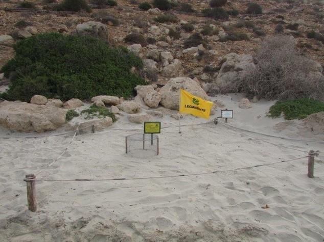 Ambiente: tartaruga marina torna a deporre a Lampedusa, 101 uova