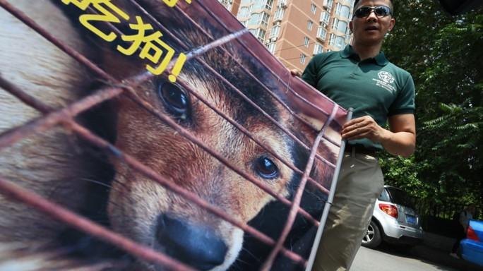 Al via festival della carne di cane in Cina