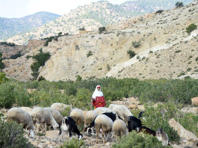 Tunisia: piattaforma per donne zone rurali grazie a Cooperazione