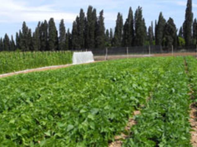 "Agricoltura: Sardegna, on line bando ""Terra ai giovani"""