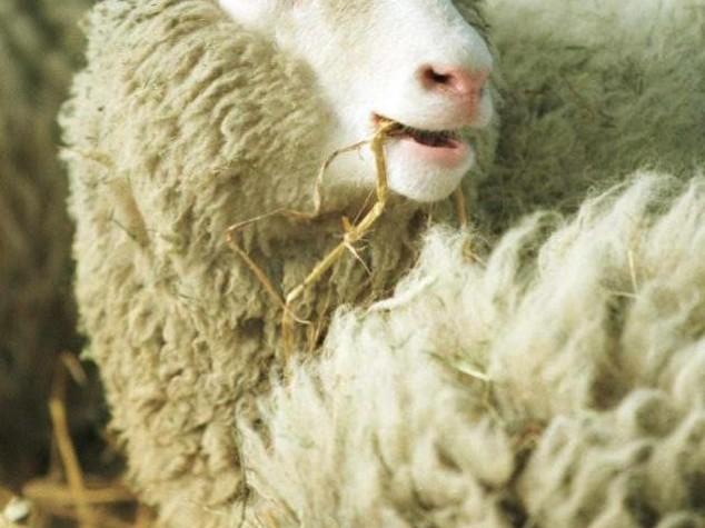 Scienza: 20 anni fa rivoluzione Dolly, clonazione divenne realta'