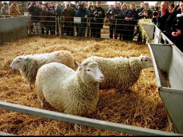 Scienza: Novelli, con pecora Dolly rivoluzionate biotecnologie