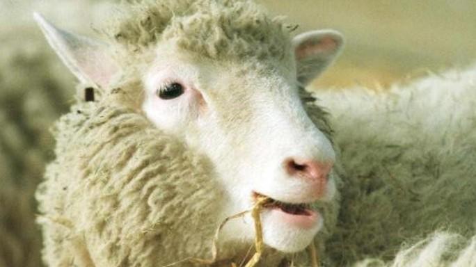 20 anni fa rivoluzione Dolly, clonazione divenne realta'