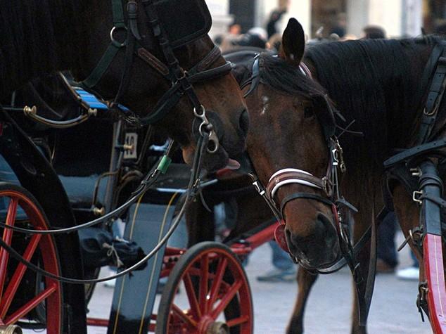 Firenze si mobilita contro uso cavalli su carrozze