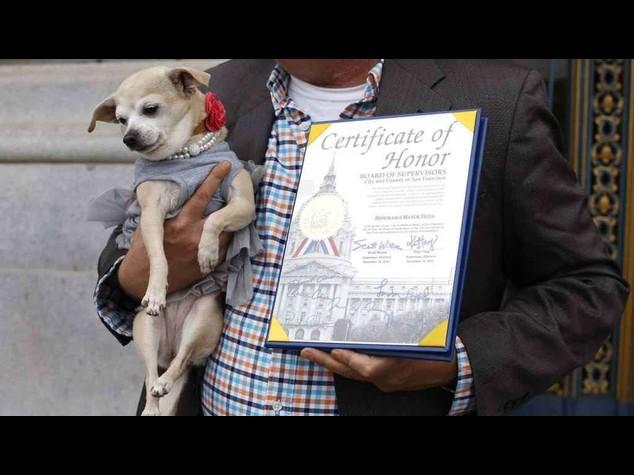Il chihuahua Frida sindaco di San Francisco per un giorno - Foto