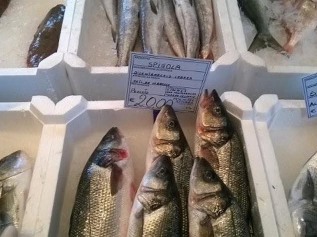 Consumi: Coldiretti, fermo pesca in Adriatico 1 su 3 non lo sa