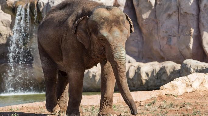 Elefante uccide bimba con una sassata allo zoo di Rabat