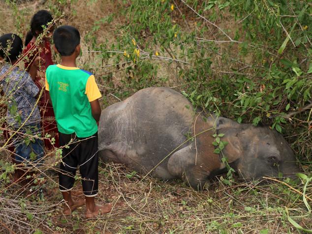 Sri Lanka, treno travolge e uccide quattro elefanti
