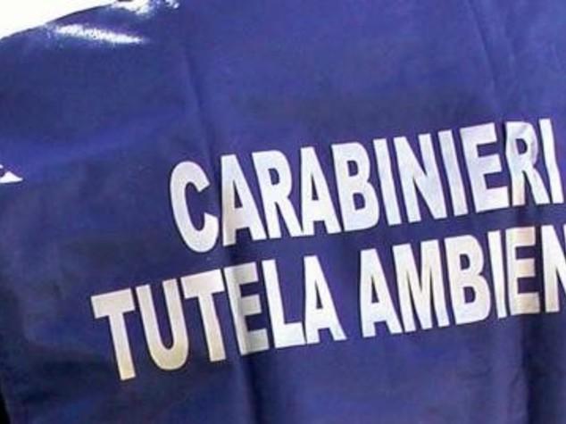 Ambiente:rafforzata collaborazione regione Fvg e Carabinieri Noe
