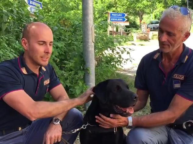 Leo, il cane-eroe che ha salvato la piccola Giorgia