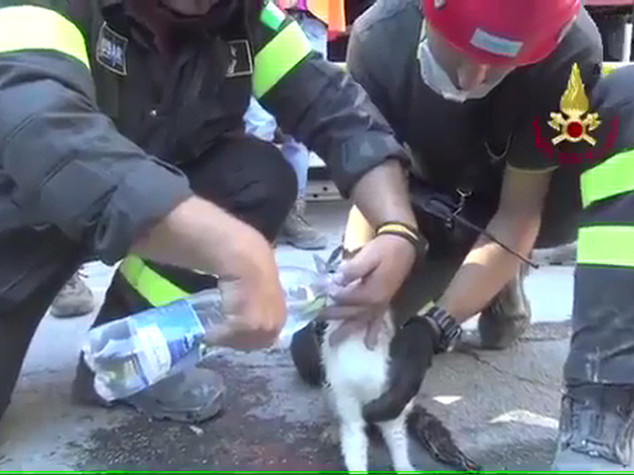 Salvati dal terremoto quasi mille animali