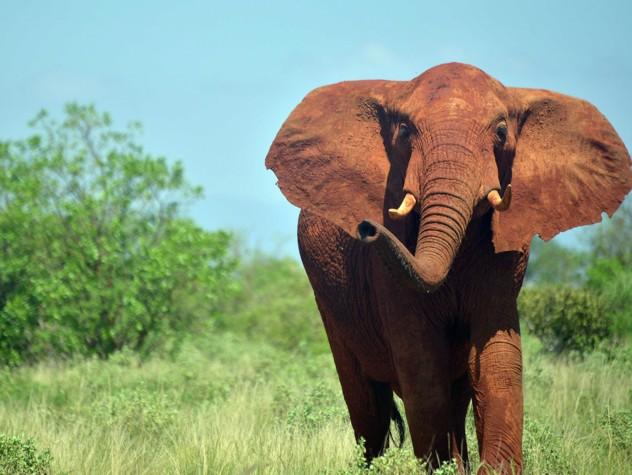 Morto per una foto in Kenya, italiano schiacciato da elefante