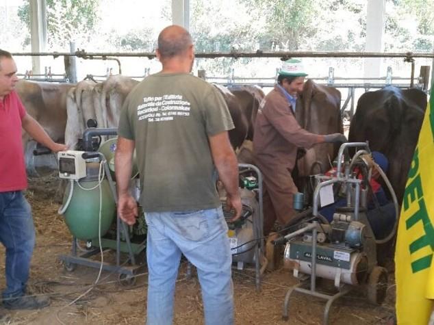 Terremoto: arrivano le prime caciotte solidali salva mucche