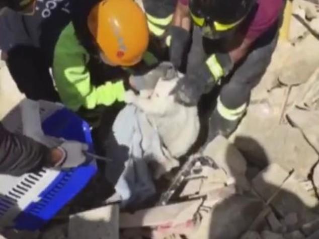 Salvo dopo 15 giorni, gatto estratto vivo dalle macerie - VIDEO