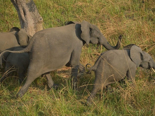 South Africa: rhino poaching in decline but more elephants killed