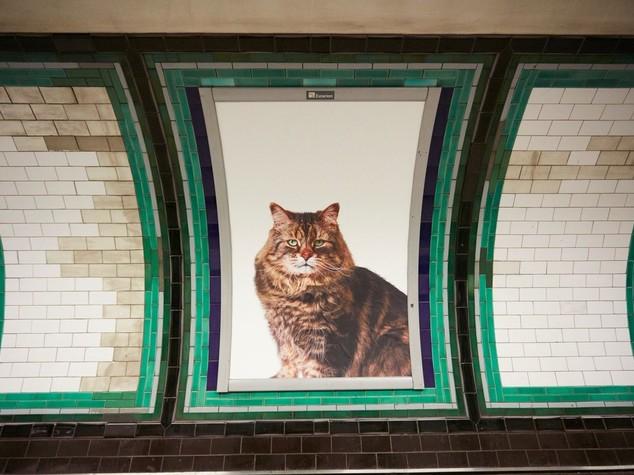 """Foto gatti invadono metro di Londra, """"basta pubblicità"""" - FOTO"""