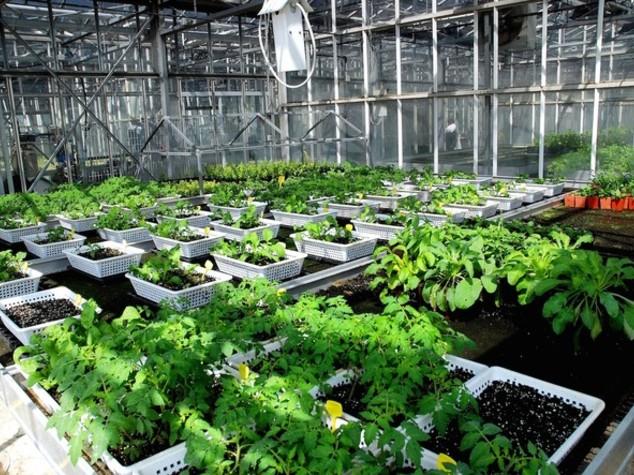 Agricoltura: Agroinnova, nuovi parassiti per cambiamenti clima