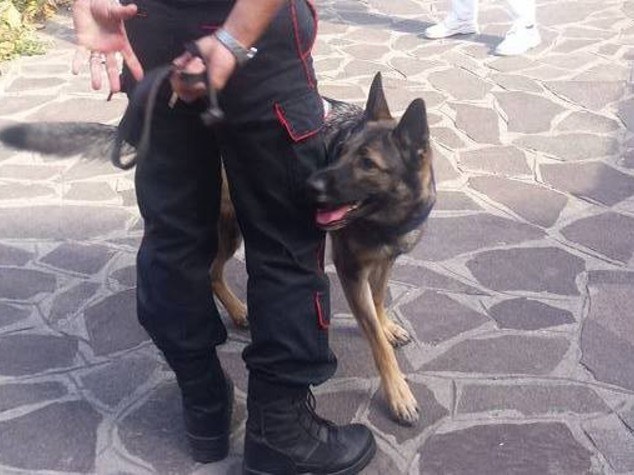 Taranto, operazione antiusura dei carabinieri: 15 arresti