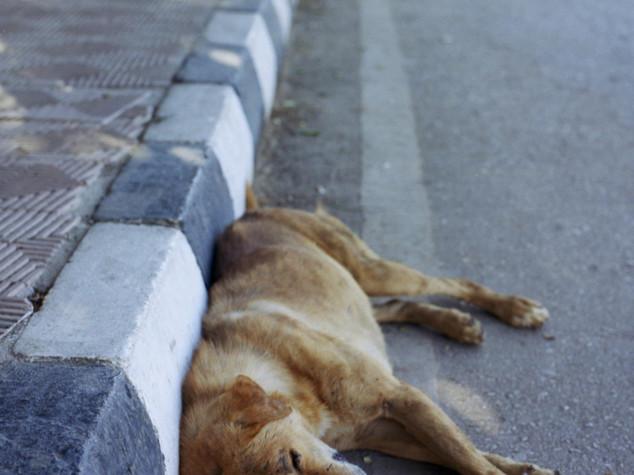 Veterinaria investe cane e fugge, denunciata all'ordine