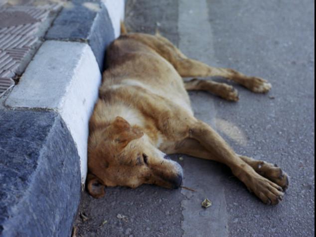 Milano, Rozza: veterinaria ha investito cane e non si è fermata